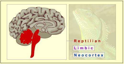 ReptilianBrain